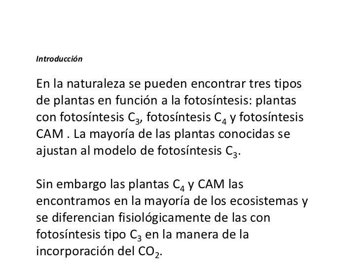 Fotosintesis c3 c4 y cam ppt fandeluxe Images