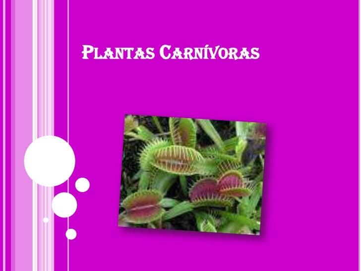 Plantas Carnívoras<br />