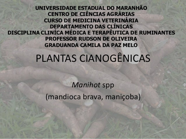 PLANTAS CIANOGÊNICAS Manihot spp (mandioca brava, maniçoba) UNIVERSIDADE ESTADUAL DO MARANHÃO CENTRO DE CIÊNCIAS AGRÁRIAS ...