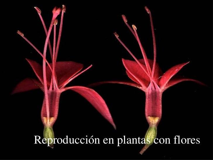 Reproducción en plantas con flores