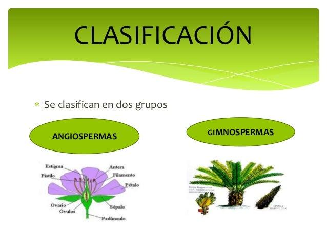 Plantas con semilla for Que se planta en septiembre