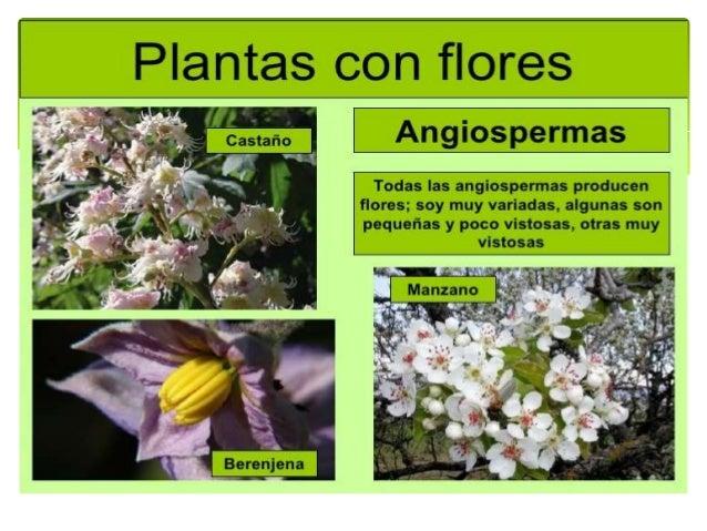 Plantas con semilla - Cuales son las plantas con flores ...