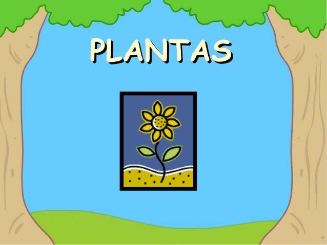 PLANTASPLANTAS