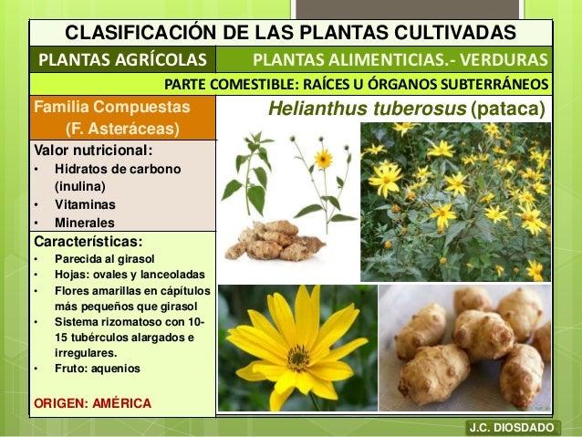 Plantas cultivadas origen y clasificaci n for Caracteristicas de las plantas ornamentales