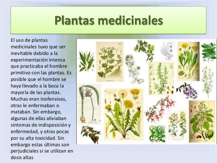 plantas alimenticiasdentro de todos los tipos diferentes de plantas
