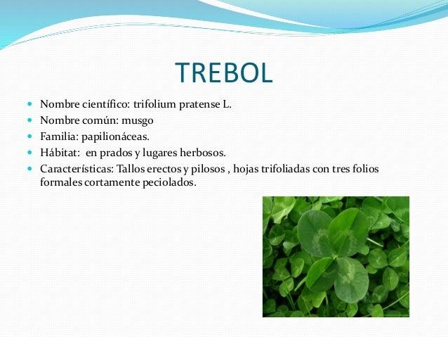 Plantas del colegio for Tipos de arboles y caracteristicas