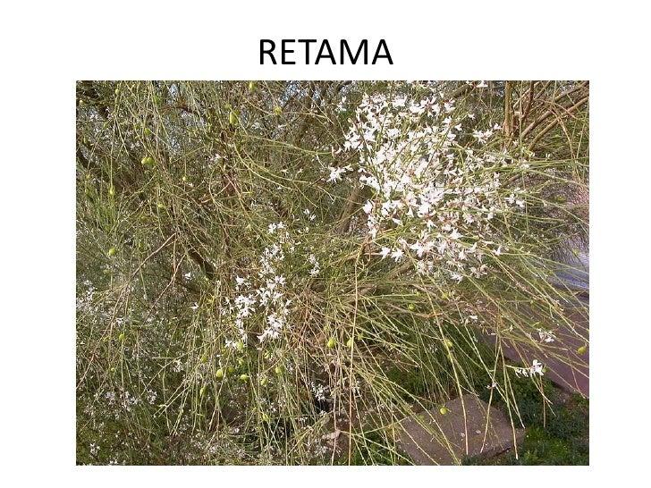 Plantas del cra 2 Slide 3