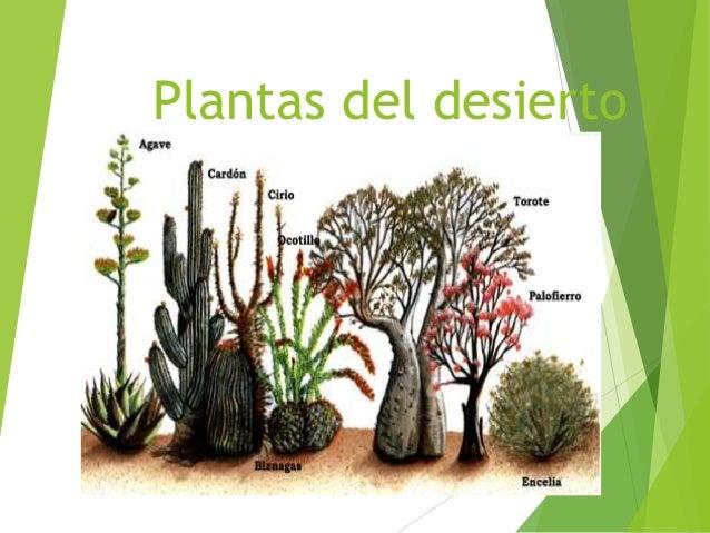 plantas del desierto 3 desierto un desierto es un bioma