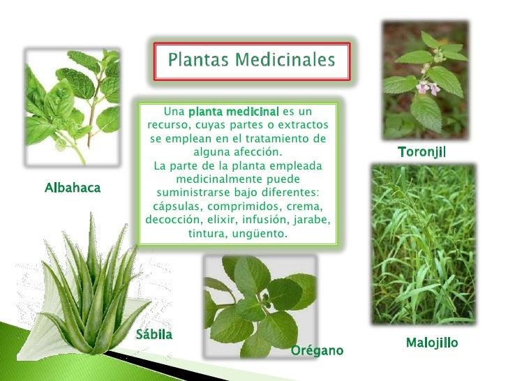 Plantas del huerto y vivero escolar roque pinto for Plantas beneficiosas para el huerto
