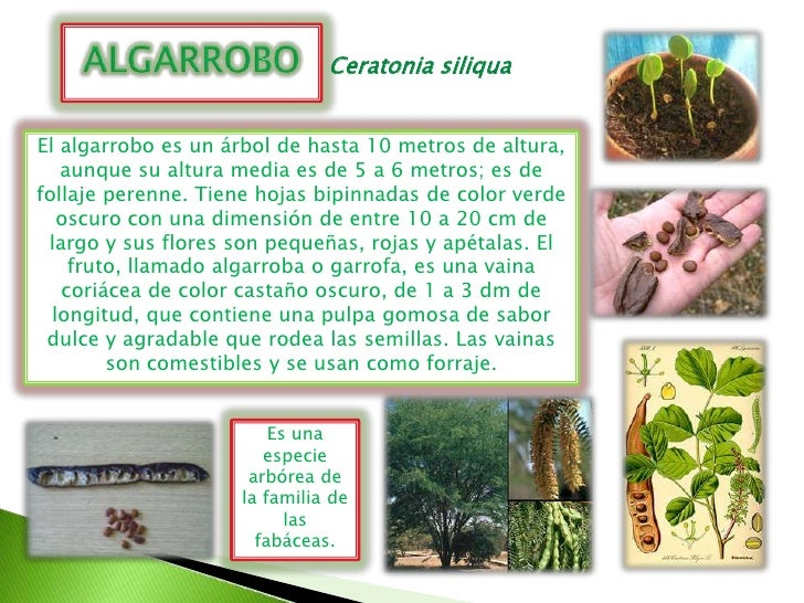 Plantas del huerto y vivero escolar roque pinto for Caracteristicas del vivero