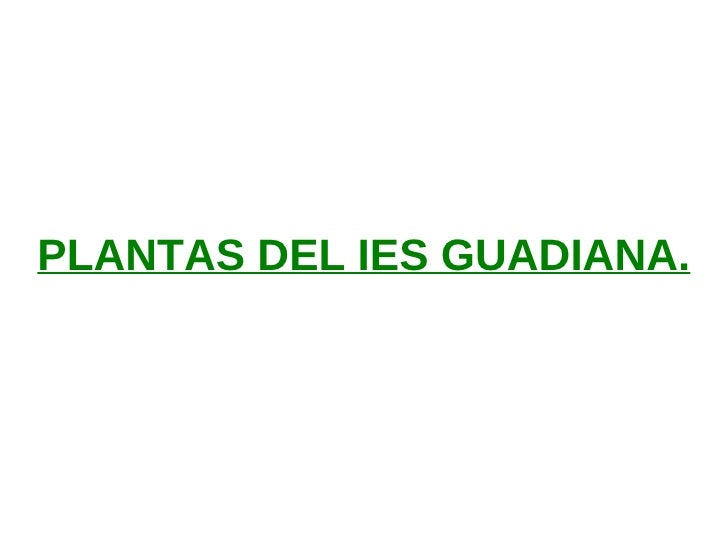 PLANTAS DEL IES GUADIANA.