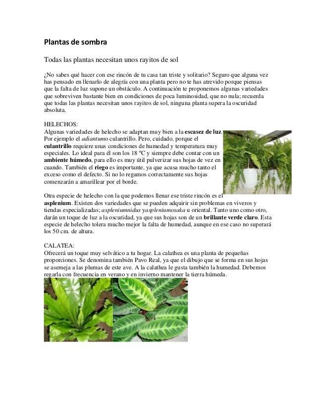Plantas de sombra for Plantas de exterior que no necesitan sol
