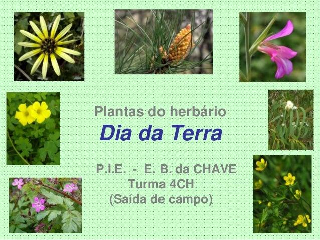 Plantas do herbário Dia da Terra P.I.E. - E. B. da CHAVE Turma 4CH (Saída de campo)