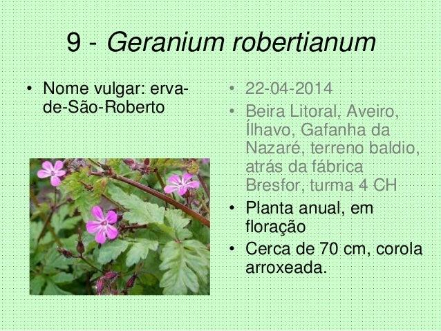 9 - Geranium robertianum • Nome vulgar: erva- de-São-Roberto • 22-04-2014 • Beira Litoral, Aveiro, Ílhavo, Gafanha da Naza...