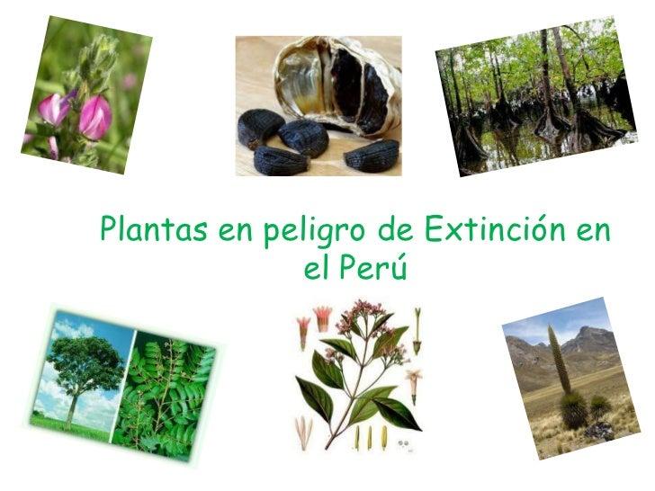 Plantas en peligro de Extinción en el Perú<br />