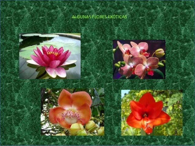 Plantas ex ticas for Plantas exoticas online