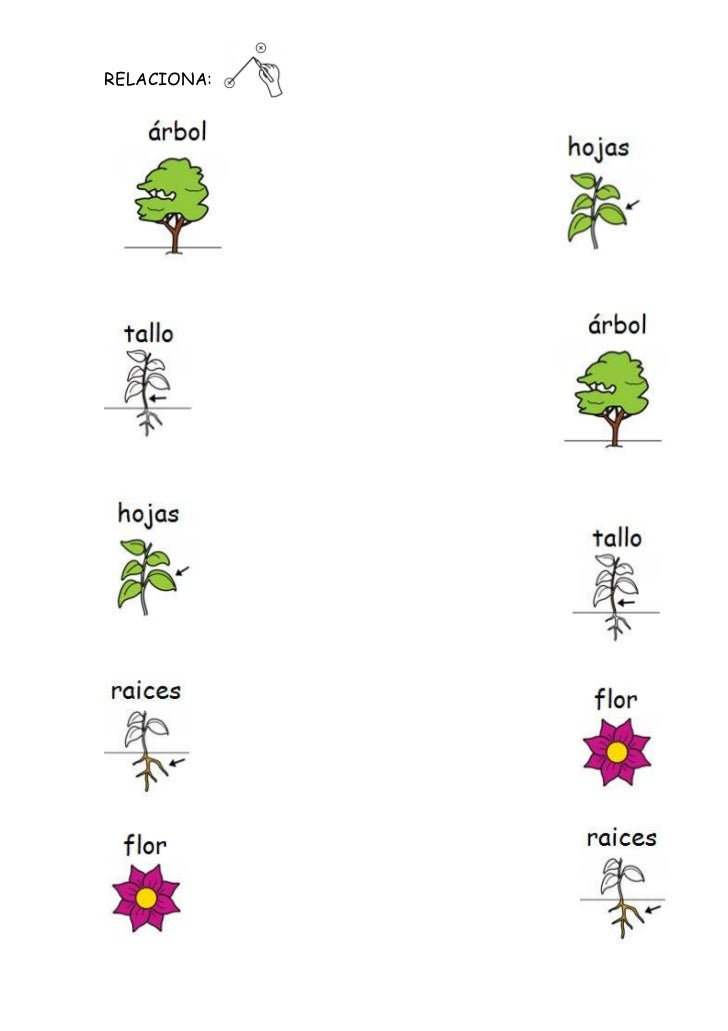 Plantas Fichas