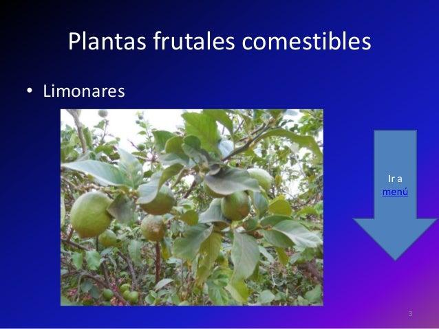 Plantas frutales for Plantas frutales