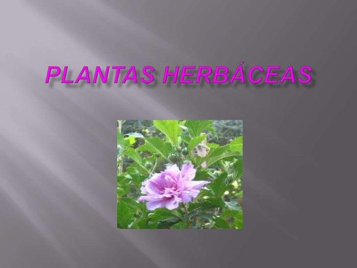 Plantas herbáceas<br />