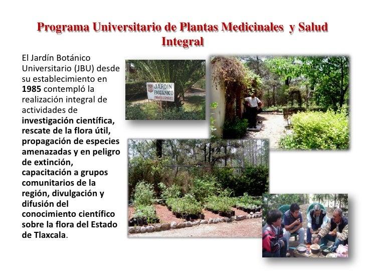 Programa universitario de plantas medicinales y salud integral for Jardin botanico medicinal