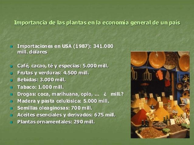 Plantas interes agricola presentaci n for Importancia de las plantas ornamentales