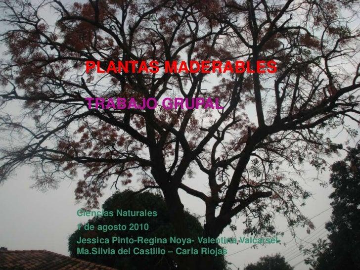 PLANTAS MADERABLESTRABAJO GRUPAL <br />Ciencias Naturales<br />1 de agosto 2010<br />Jessica Pinto-Regina Noya- Valentina ...