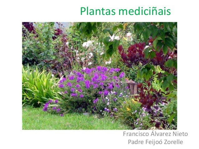 Plantas mediciñais  Francisco Álvarez Nieto Padre Feijoó Zorelle