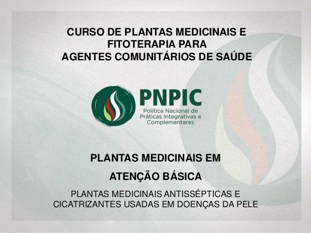 PLANTAS MEDICINAIS ANTISSÉPTICAS E CICATRIZANTES USADAS EM DOENÇAS DA PELE PLANTAS MEDICINAIS EM ATENÇÃO BÁSICA CURSO DE P...