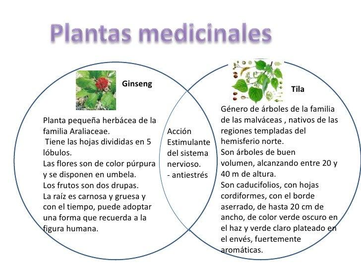 Plantas medicinales<br />Ginseng<br />Tila<br />Género de árboles de la familia de las malváceas , nativos de las regiones...