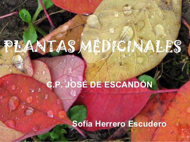 PLANTAS MEDICINALES Sofía Herrero Escudero C.P. JOSÉ DE ESCANDÓN