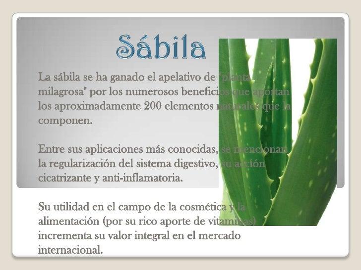 Plantas medicinales for Planta decorativa con propiedades medicinales crucigrama