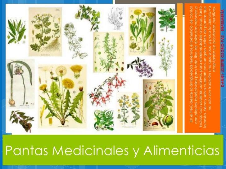 Plantas medicinales y alimenticias for Raices ornamentales