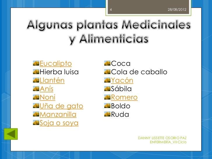 Plantas medicinales y alimenticias for 5 nombres de plantas ornamentales