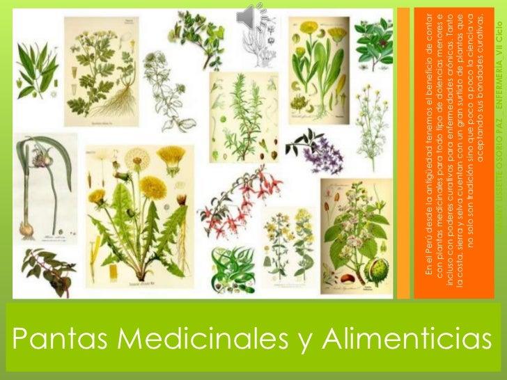 Plantas medicinales y alimenticias for Que son plantas ornamentales ejemplos