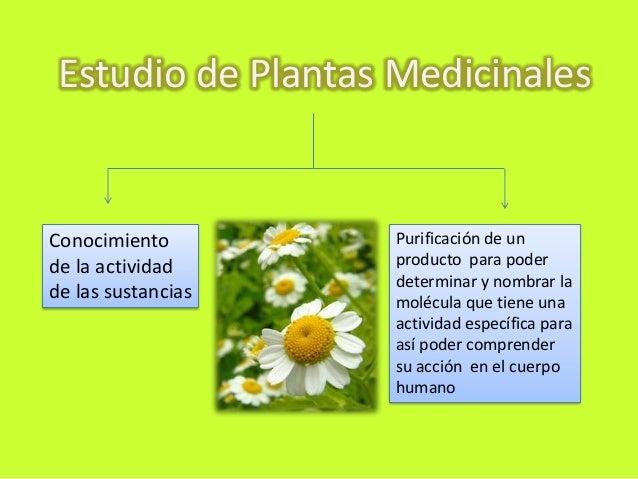 Plantas medicinales for Plantas de purificacion