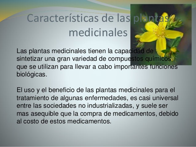 Plantas medicinales for Cuales son las plantas ornamentales y para que sirven