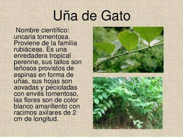 Plantas medicinales for Hojas ornamentales con sus nombres