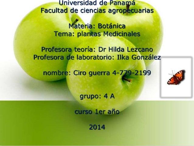 Universidad de Panamá  Facultad de ciencias agropecuarias  Materia: Botánica  Tema: plantas Medicinales  Profesora teoría:...