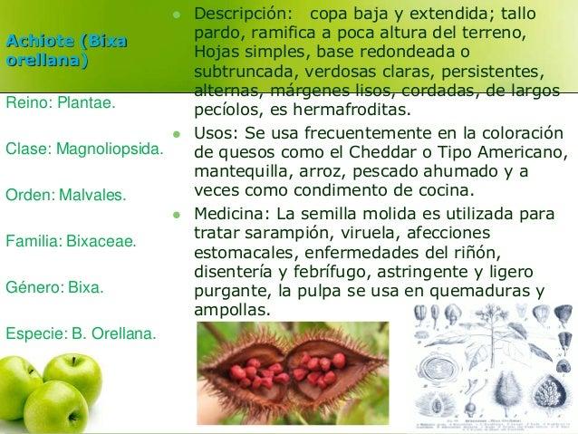 Achiote (Bixa  orellana)   Descripción: copa baja y extendida; tallo  pardo, ramifica a poca altura del terreno,  Hojas s...