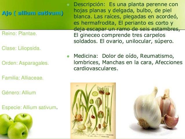 Ajo ( allium sativum)   Descripción: Es una planta perenne con  hojas planas y delgada, bulbo, de piel  blanca. Las raíce...