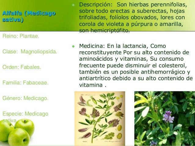 Alfalfa (Medicago  sativa)   Descripción: Son hierbas perennifolias,  sobre todo erectas a suberectas, hojas  trifoliadas...