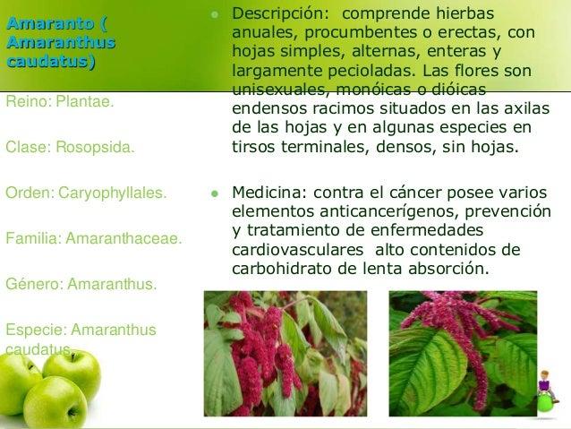 Amaranto (  Amaranthus  caudatus)   Descripción: comprende hierbas  anuales, procumbentes o erectas, con  hojas simples, ...