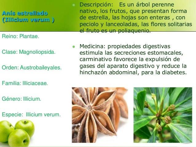 Anís estrellado  (Illicium verum )   Descripción: Es un árbol perenne  nativo, los frutos, que presentan forma  de estrel...