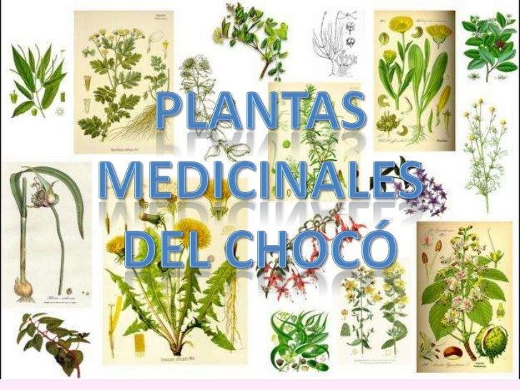 PLANTAS MEDICINALESDEL CHOCó<br />