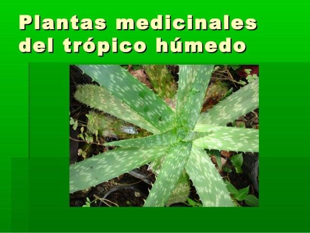 """Plantas medicinalesPlantas medicinalesdel trópico húmedodel trópico húmedo """"""""LaLa medicina está en su patio""""medicina está..."""