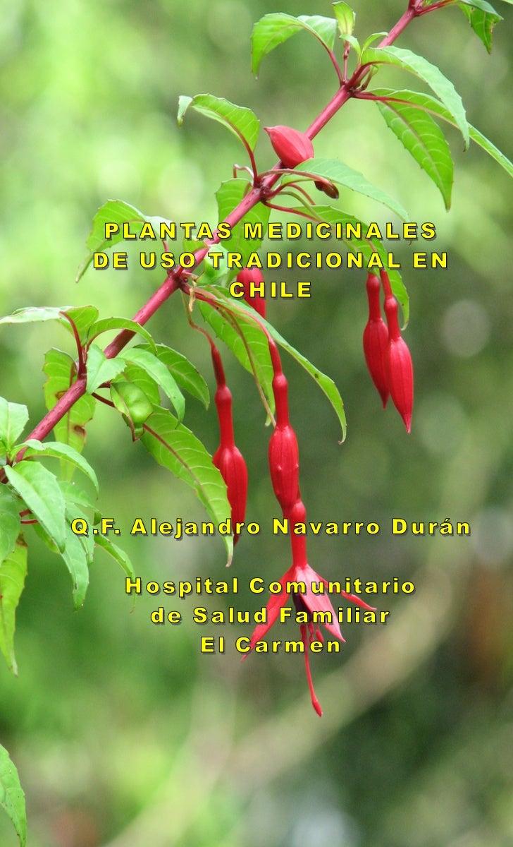 Plantas medicinales de uso tradicional en chile for Planta decorativa con propiedades medicinales