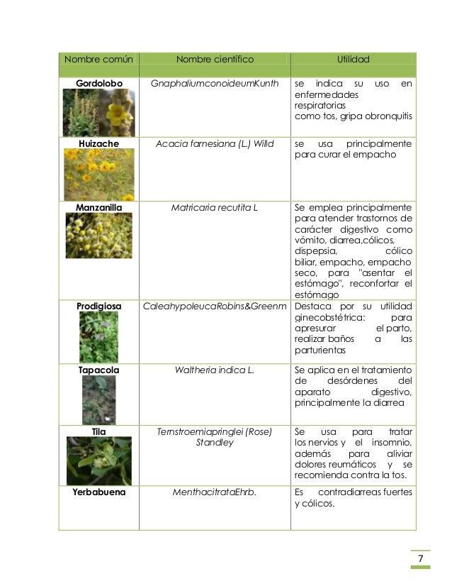 Plantas medicinales en m xico Nombres de plantas comunes
