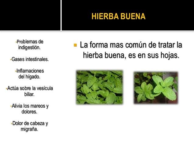 Plantas medicinales mas comunes Nombres de plantas comunes