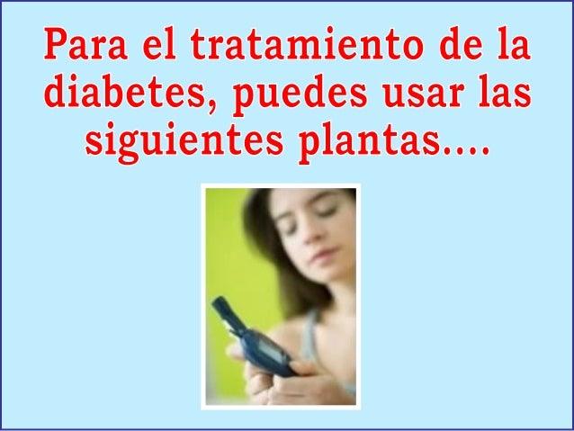 La canela es unfuerte estimuladorde la actividad dela insulina, y por lotanto resulta degran utilidad en eltratamiento de ...