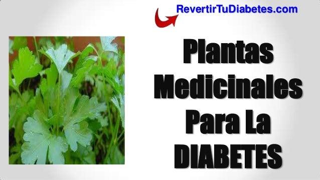 Plantas Medicinales Para La Diabetes ! La Mejor Opción